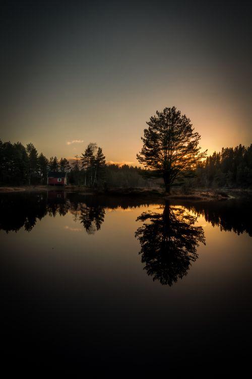 Treet i Løyningsvannet